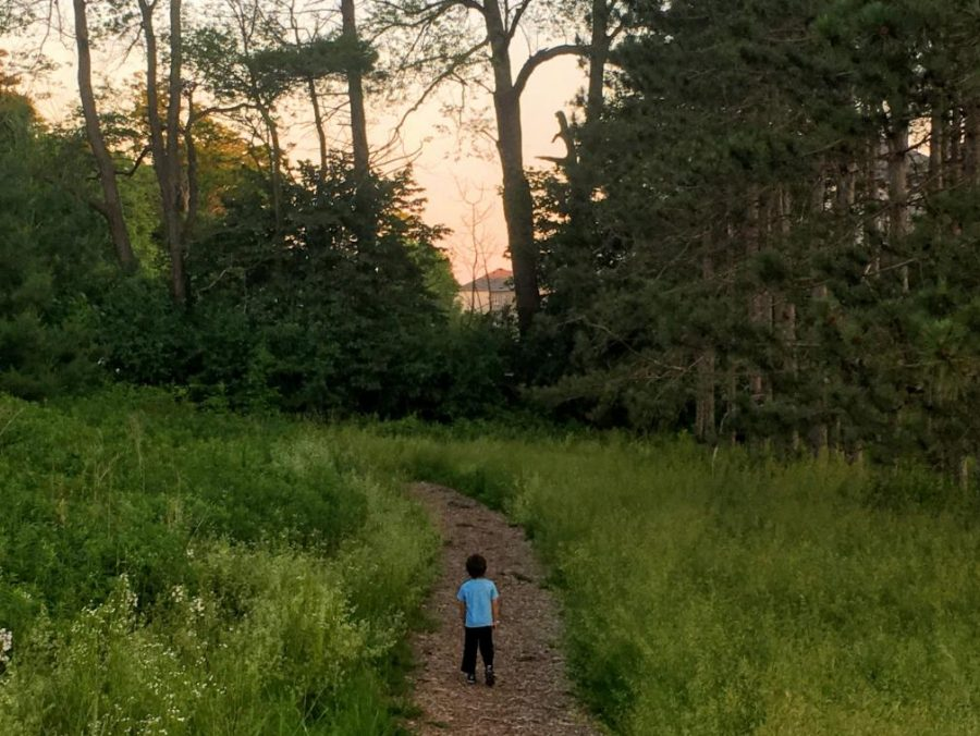 Young child in the middle of a nature trail