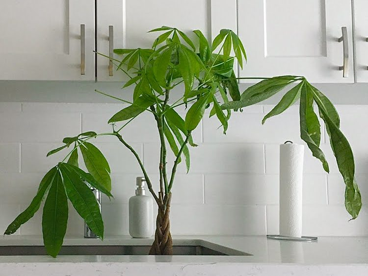 6+indoor+plants+you+need+this+winter